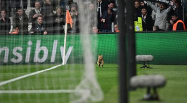 Seekor kucing masuk ke lapangan dan menginterupsi laga antara Besiktas kontra Bayern Munchen pada leg kedua 16 besar Liga Champions di Stadion Vodafone, Kamis (15/3). Kucing itu  sempat mengganggu jalannya pertandingan pada menit ke-50. (OZAN KOSE/AFP)