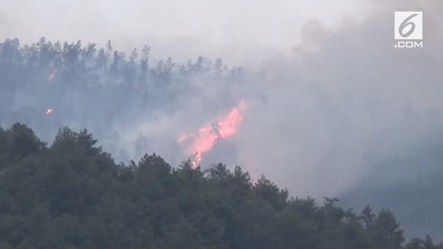 Kebakaran di Lereng Gunung Lawu sudah 4 hari belum bisa dipadamkan. Api telah membakar sedikitnya 25 hingga 30 hektar areal hutan