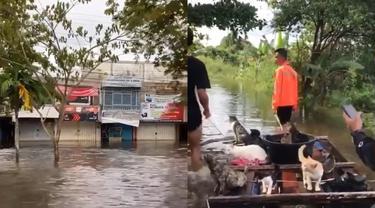 Kumpulan pemuda lakukan upaya penyelamatan kucing yang jadi korban banjir.