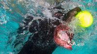 Foto: Ekspresi Wajah Anjing di Dalam Air (Lucy Ray)