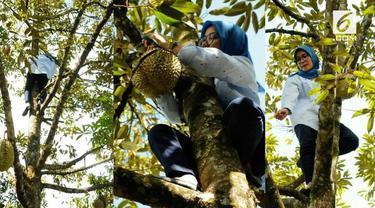 Bupati Lebak Hj. Iti Octavia Jayabaya meninjau perkebunan durian di kampung palopat. Tanpa ragu, ia langsung memanjat pohon durian untuk memanen satu buah durian.