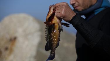 Salem Abu Amerah menunjukkan ikan tangkapannya setelah menyelam di laut di pelabuhan  Kota Gaza (20/12/2019). Salem Abu Amerah mencari ikan untuk membantu keluarganya. (AP Photo/Hatem Moussa)