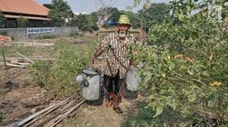 Kakek Suyitno atau Pak Dul membawa air untuk menyiram ladang cabai di lahan bekas gusuran kawasan Pasar Ikan, Penjaringan, Jakarta, Kamis (25/7/2019). Kakek enam cucu ini menanami lahan bekas gusuran tersebut sebagai siasat dalam menghadapi mahalnya harga cabai. (merdeka.com/Iqbal Nugroho)