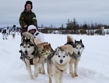Anjing Siberian Husky Perkuat Armada Utara Rusia