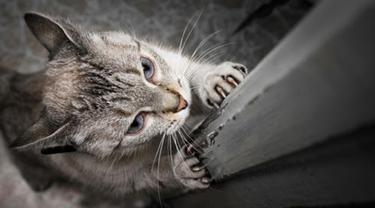 Hati-hati, Cakaran Kucing Kamu Bisa Menyebabkan 3 Penyakit Ini