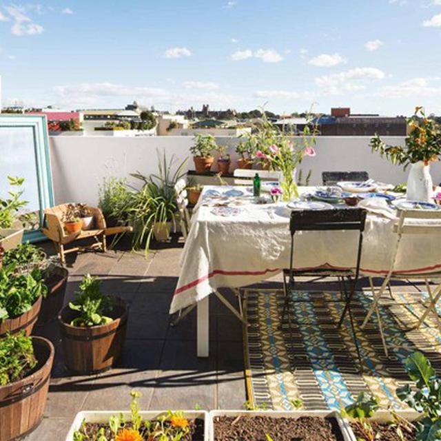 4 Jenis Tanaman Yang Cocok Untuk Roof Garden Anda Properti