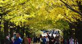 Para pengunjung berjalan di bawah pohon ginkgo selama musim gugur di Showa Memorial Park, Tokyo, Jepang (15/11). Pohon Ginkgo yang berasal dari Tiongkok ini dikenal sebagai pohon rambut gadis. (AP Photo / Eugene Hoshiko)