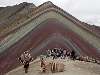 Seorang pria Andes beristirahat bersama llamanya di Gunung Pelangi di Pitumarca, Peru (2/4). Rainbow Mountain atau Gunung Pelangi memiliki warna-warni seperti pelangi ini memiliki ketinggian 16.404 kaki (5.000 meter) di Andes Peru. (AP Photo/Martin Mejia)