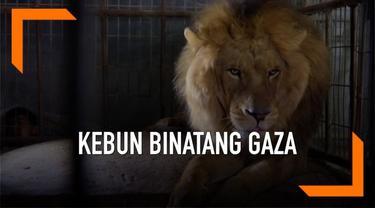 Puluhan hewan di diselamatkan dari kebun binatang Rafah di Gaza yang sudah tidak terurus. Aksi penyelamatan itu dilakukan badan internasional Four Faws yang akan pindahkan hewan tersebut ke Jordania dan Afrika.