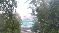 Akibat hujan deras, pohon di Semanggi Jakarta Selatan tumbang. Kondisi ini menutupi bagian ruas jalan. (TMC Polda Metro Jaya)