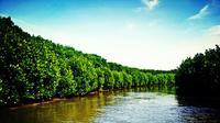 Jelajah hutan mangrove di Dukuh Pandansari, Desa Kaliwlingi, menjadi primadona baru wisata di Kabupaten Brebes, Jateng. (Liputan6.com/Fajar Eko Nugroho)