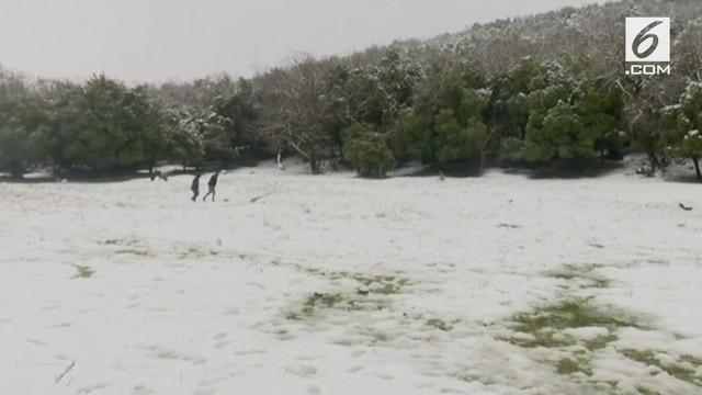 Hujan salju pertama di Dataran Tinggi Golan. Dataran Tinggi Golan adalah sebuah wilayah yang disengketakan antara Israel dan Suriah.