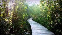 Hutan Mangrove Wonorejo adalah wisata alam terbaik di Surabaya (Foto: indoturs.com)