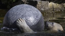 Hertha si beruang kutub bermain dengan bolanya saat suhu mencapai lebih dari 30 derajat Celcius  di kebun binatang Tierpark di Berlin, Jerman (26/7/2019). Rekor suhu terpanas baru tercatat di berbagai penjuru Eropa termasuk Jerman sewaktu gelombang panas melanda benua tersebut. (AFP Photo/John Macdo