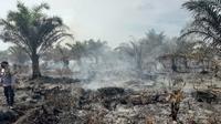 Kebakaran lahan di Kabupaten Agam, Sabtu (13/2/2021). (Dok BPBD Agam)