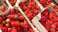 Strawberry / Sumber: iStockphoto