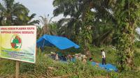 Masyarakat Desa Gondai, Kabupaten Pelalawan, membangun tenda untuk memertahankan kebun dari eksekusi lahan. (Liputan6.com/M Syukur)