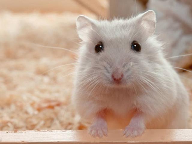 Makanan Hamster Alami Yang Sehat Dan Aman Mudah Didapatkan Hot