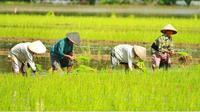 Para petani sedang menanam padi di sawah (dok.Instagram/@vestanesia/https://www.instagram.com/p/CPagxe-h5MJ/Komarudin)