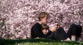 Pasangan menikmati cuaca cerah yang hangat di dekat pohon sakura Jepang yang mekar di Stadtpark di Wina, Austria (22/3). (AFP Photo/Joe Klamar)