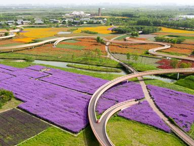 Foto yang diabadikan dari udara pada 13 Mei 2020 ini memperlihatkan ladang bunga di Taman Hutan Gunung San Tai di Kota Suqian, Provinsi Jiangsu, China timur. (Xinhua/Li Bo)