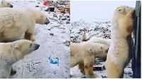 Beruang Kutub di Tumpukan Sampah (Sumber: Twitter/AleZ2016)