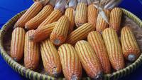 Hasil panen jagung petani Kabupaten OKI Sumsel yang tergabung dalam program DMPA APP Sinar Mas (Liputan6.com / Nefri Inge)