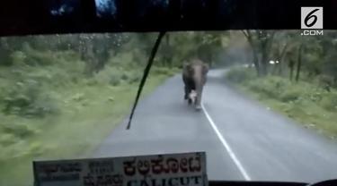 Seekor induk gajah mengejar bus berpenumpang 60 orang. Insiden terjadi di Taman Nasional Bandipur.