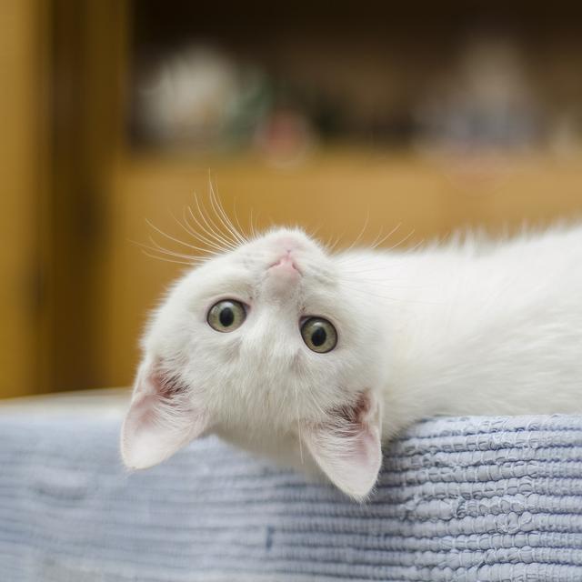 6 Penyakit Yang Dapat Ditularkan Kucing Pada Manusia Hot Liputan6 Com