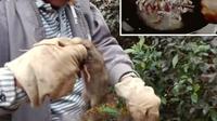 Kisah Laki-laki Pemangsa Tikus Selama 20 Tahun