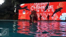Lumba-lumba berkolaborasi dengan barongsai melakukan atraksi untuk menghibur pengunjung di kawasan wisata Ancol, Jakarta, Senin (8/2). Dalam rangka libur Imlek, Ancol menampilkan pertunjukan lumba-lumba yang berbeda dari biasanya (Liputan6.com/JohanTallo)