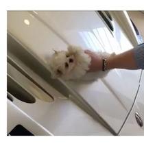 Anak Anjing Jadi Lap Mobil. (Autoblog)