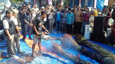 Ribuan Bibit dan Pohon Kurma Dibakar Habis di Dermaga Bea Cukai