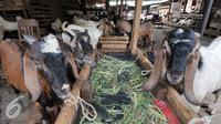 Sejumlah hewan kurban di kawasan Tanah Abang, Jakarta, Sabtu (3/9). Untuk harga Kambing dijual dengan harga Rp2,2-5,5 juta, sedangkan harga sapi Rp18-35 juta. (Liputan6.com/Yoppy Renato)