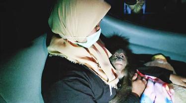 Bayi orangutan yang gagal diselundupkan dari Kota Dumai menuju Malaysia.