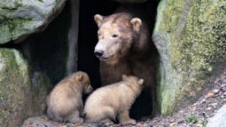 """Dua anak beruang kutub duduk di dekat sang induk """"Malik"""" selama tamasya pertama mereka di Kebun Binatang Aalborg, Denmark, 4 Maret 2020. Kebun Binatang ini membiarkan penghuni baru tersebut melakukan langkah pertamanya di dunia luar. (Henning Bagger/Ritzau Scanpix/AFP)"""