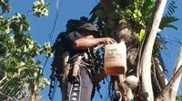 Agustinus, menyadap air aren sebagai bahan membuat gula merah di tengah pandemi Covid-19 di Kabupaten Kolaka.(Liputan6.com/Ahmad Akbar Fua)