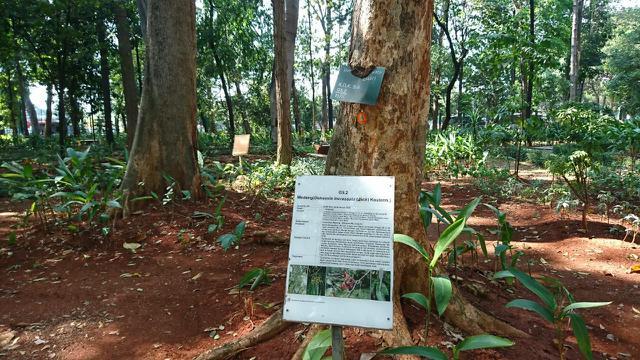 Melepas Penat Sejenak di Kafe Tengah Hutan Jakarta nan Instagramable