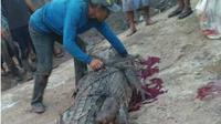 WARGA membelah perut buaya muara yang memakan Wartoyo (37), warga Teluk Lanus, Sungai Apit, Kabupaten Siak, Riau, Rabu, 19 Juni 2019. (Riauonline.co.id)