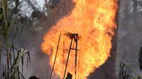 Petugas pemadam kebakaran berada di lokasi kebakaran pengeboran sumur minyak ilegal milik warga di Peureulak, Provinsi Aceh, Rabu (25/4). Hingga sekarang semburan api yang mencapai ketinggian 100 meter itu belum bisa dipadamkan. (ILYAS ISMAIL/AFP)