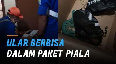 Seorang pemilik pengiriman barang ke luar negeri menemukan ular berbisa didalam paket piala.