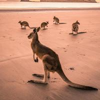 BCA Australia Travel Fair 2019 ajak wisatawan kunjungi sisi lain Australia. (Foto: instagram.com/australia)