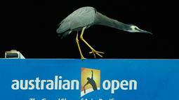Seekor burung berada di lapangan tenis saat gelaran  turnamen tenis Australia Terbuka di Melbourne Park, Australia, Selasa (19/1). Burung ini sempat beberapa sempat  menjadi  perhatian penonton dan pemain. (REUTERS / Tyrone Siu)