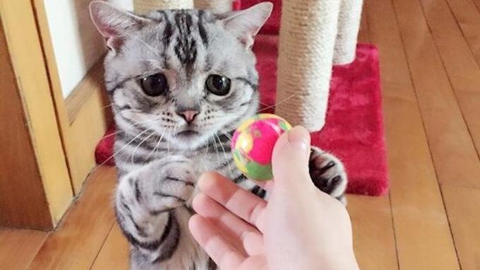 Download 80+  Gambar Kucing Yang Sedih Paling Imut HD