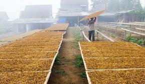 Industri rokok telah menyumbang kontribusi ekonomi terbilang besar.  Tahun lalu saja, cukai hasil tembakau (CHT) mencapai Rp139,5 triliun.