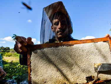 Melihat Proses Panen Lebah Madu di Kuba