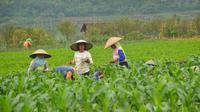 Rumah tangga usaha pertanian di Kota Batu terus menurun dari tahun ke tahun (Liputan6.com/Zainul Arifin)