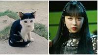 Kocaknya cocoklogi artis dengan kucing ala netizen. (Sumber: Twitter/@animalfess2)