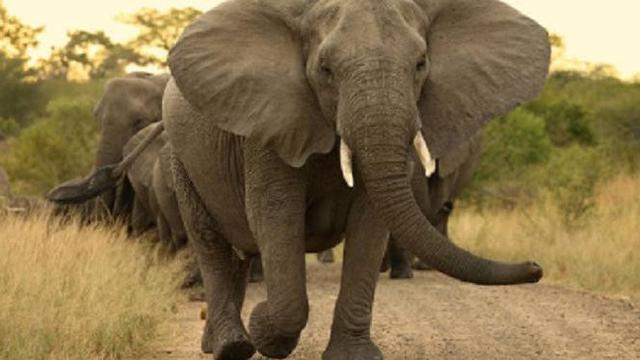 90 Koleksi Gambar Ilustrasi Hewan Dan Alam Terbaik