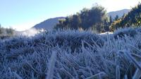 Embun es kembali muncul di Dataran Tinggi Dieng, Rabu dan Kamis (25-26/7/2018). (Foto: Liputan6.com/Dok. UPT Dieng/Muhamad Ridlo)